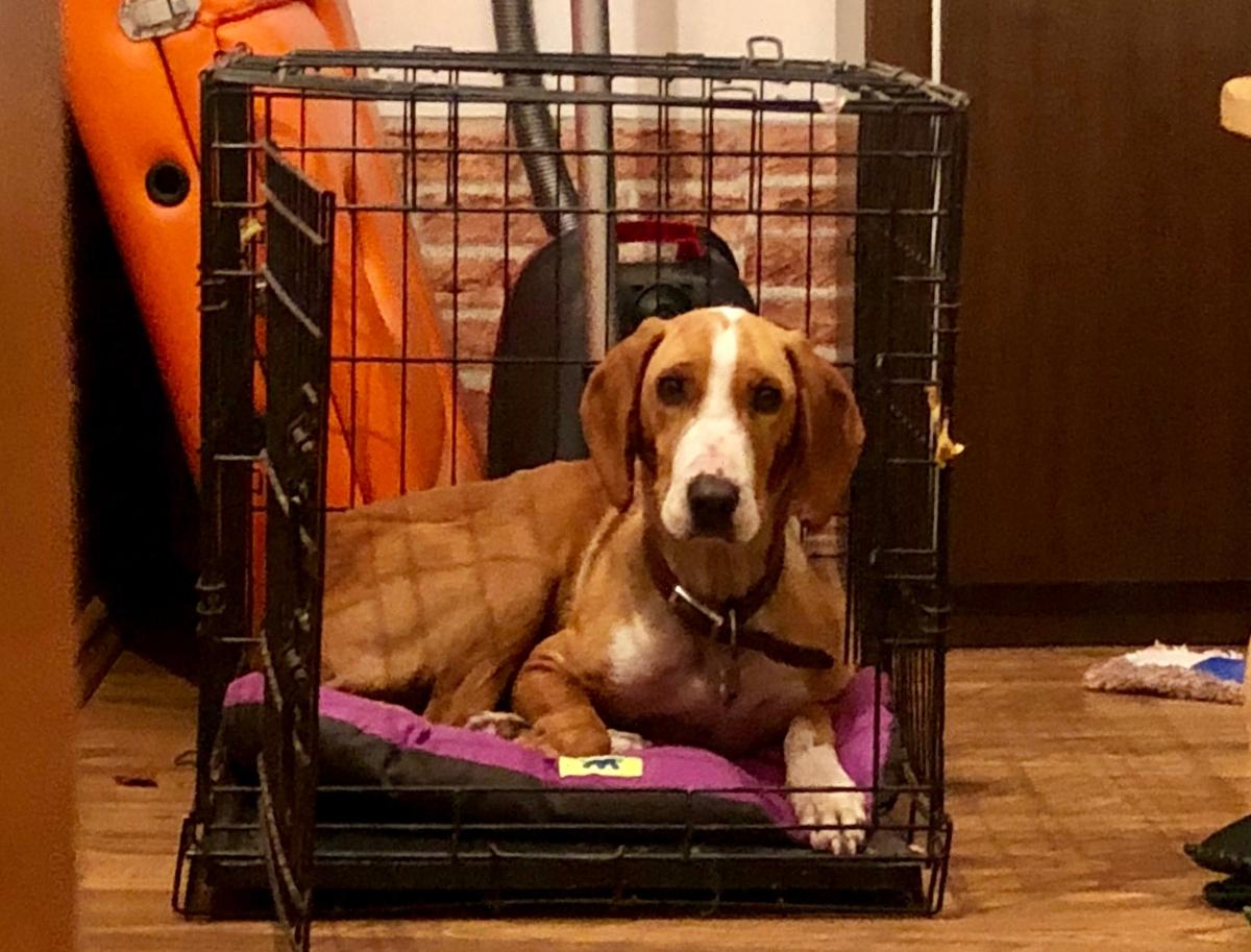 DOG RESCUE: Kova
