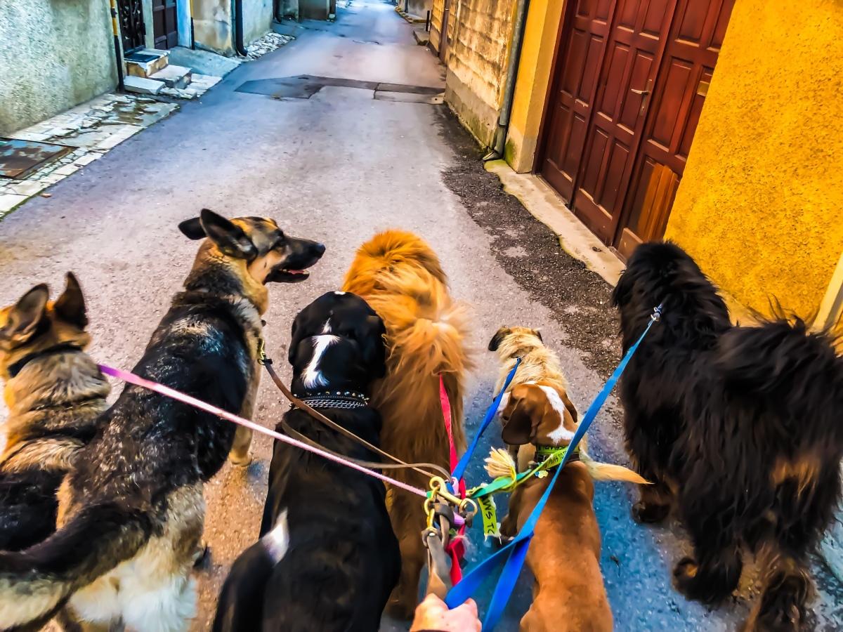 Adventures in Sarajevo