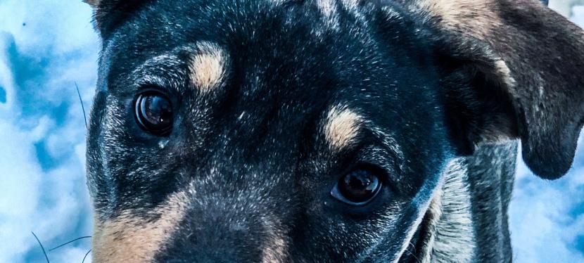 DOG RESCUE: Gabrova